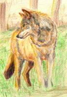 2005 - Sun Wolf by solulo