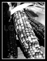 Indian Corn by lehPhotography