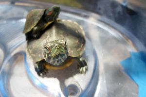 Turtle :) by this-is-fubar