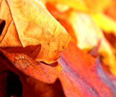 Fall Colors by Menchix4