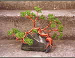 Bonsai on the rock by beads-poet