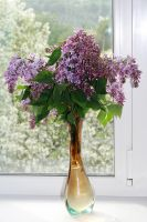 lilac Bouquet by Lubov2001