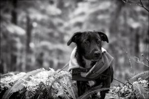 hikin pup by NWunseen