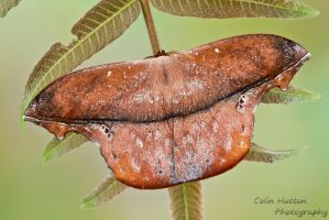 Just a leaf by ColinHuttonPhoto