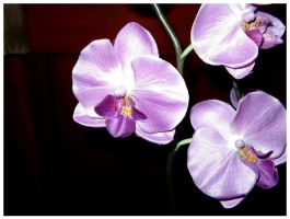 Purple Orchids by SLJones-photo