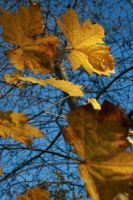 Autumn contrast by BecciES