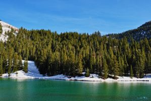 Tibble Fork by Moohoodles