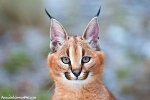 Little Caracal II by amrodel