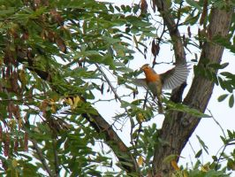fly robin fly by br1-69