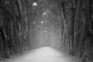 Misty Avenue by cleverless