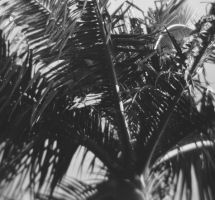 palm upclose by kimmyjune