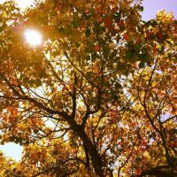 Sunlit tree by Atomic-Taco