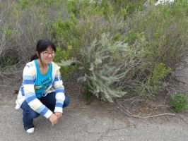 CA Native plants by SquishyPandaPower