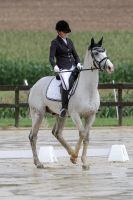 Dressage Horse Spooking by LuDa-Stock