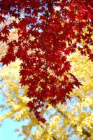Fall Leaves by GramMoo