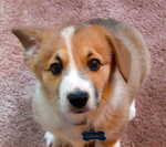 Gimli by Furrama