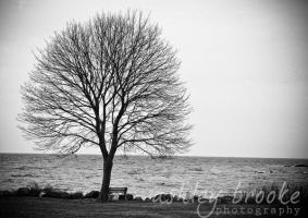 -- The Lonely Tree -- by AshleyxBrooke