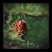 I incline to pine by Tullusion