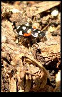 fearsome ladybug by tomegatherion
