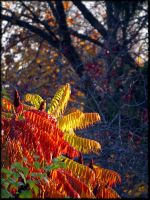 ...and Autumn comes to paint Latvia... by Yancis