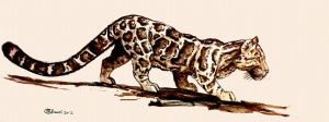 Clouded leopard - sketch by Bisanti