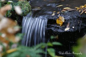 The Stream by DalePhotography
