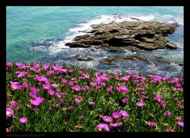Wild flowers and sea by LauraMSS
