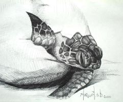 -green turtle hatchling- by PatoCafe
