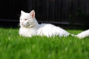 Sunbathing by pinyty