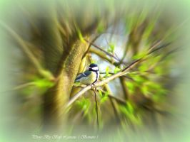 Great tit. by Bermiro