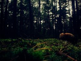 haunted forest by misscuteness