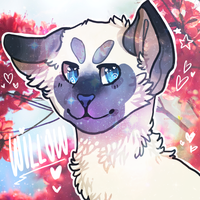 Willow by plantt