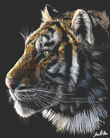 Sketchy Tiger by sugarpoultry