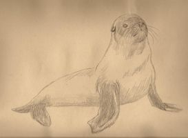 SEAL by Samy-Consu