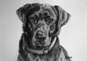 grey labrador by AnimalsART