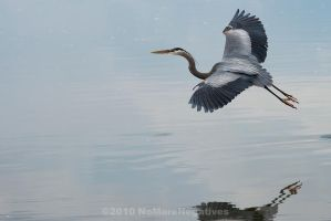 Horseshoe Lake : Heron by Katastrophey