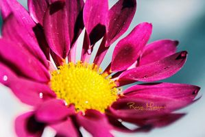 Like a flower by ll-black-star-ll