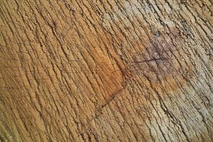 Wood Texture 15 by Limited-Vision-Stock