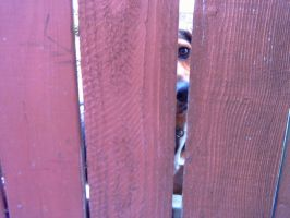 Dog through Fence by twofortheprice