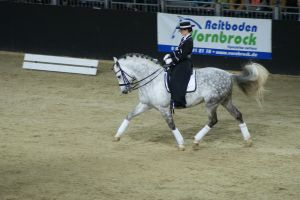 Grey andalusian sideview trot dressage by EndingStories