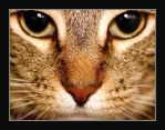 Cat: Up Close and Personal 1 by dyanna