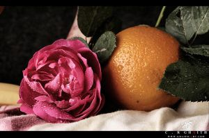 Flower and orange by Ghaith-Salih