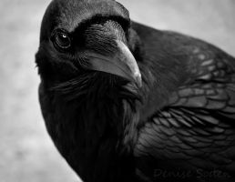 The Raven by DeniseSoden