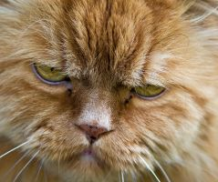 If cats had frowns by TomiTapio