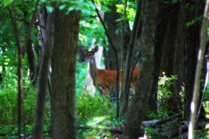 Summer Buck 3 by S-H-Photography
