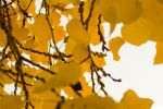 The Aspen Leaves by Bl4ck-and-wh1te