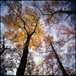 Autumn_2 by JER0ME-B