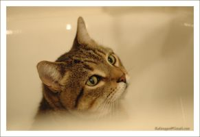 Cats on the bathtub 1 by iKaliman
