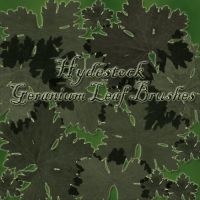 Scented Geranium Leaves by hydestock