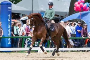 Extended Trot Chestnut WB by LuDa-Stock